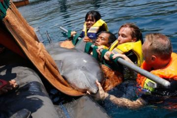 Bali Hosts First Center to Return Captive Dolphins To The Wild