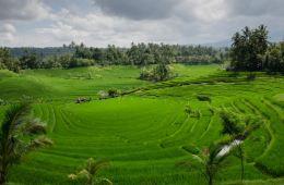 Bali To Build Eco-Friendly Tourist Village In Tabanan