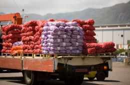 Bali Exports 12 Tons of Onions To Singapore To Boost National Exports