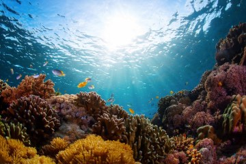 Marine Ecosystem Project Completed In Bali Sea