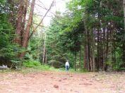 phs1 Balsamea Trail Walkaway DK 20120629