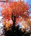 phss3-09 20120928 fall color 04