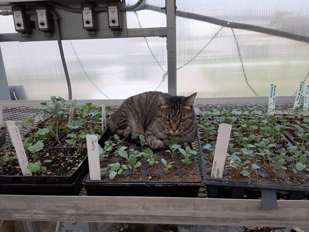 Cat On Eat South'S Nursery Plants