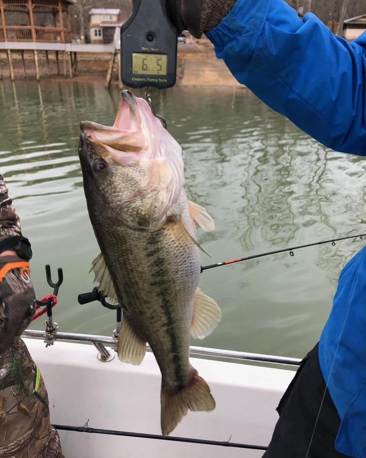 Bass Fish At Weiss Lake