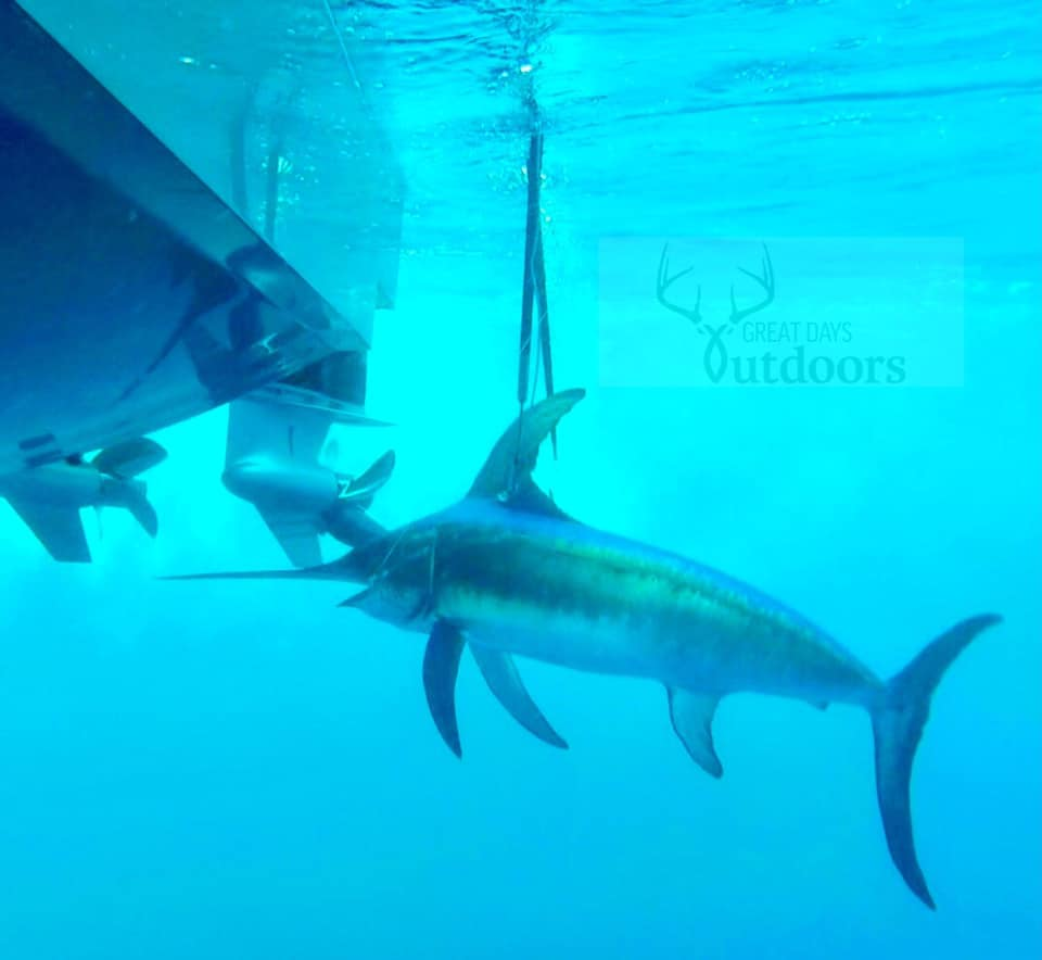 Swordfish From Great Days Outdoors Alabama Podcasts