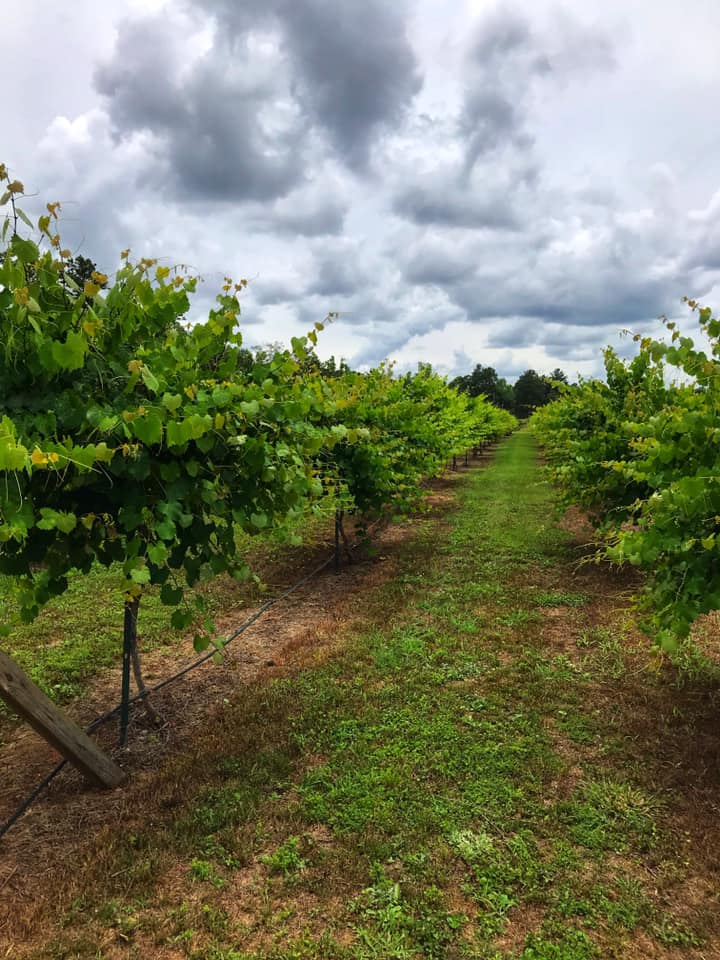 Hodges Vineyard And Winery