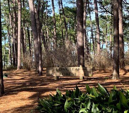 Longleaf Forest, In Langan Park