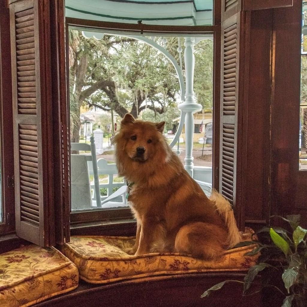 Beaux Bear, The Landlord At Kate Shepard House B&Amp;B