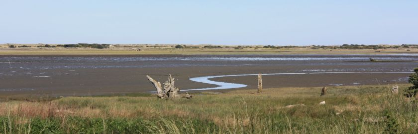 marsh cropped