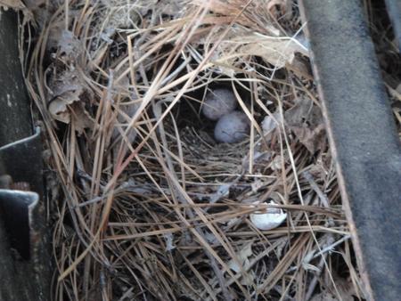birdsnest2.jpg