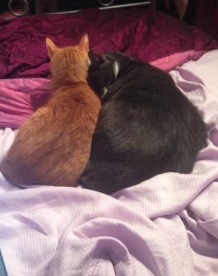 Bedmates3