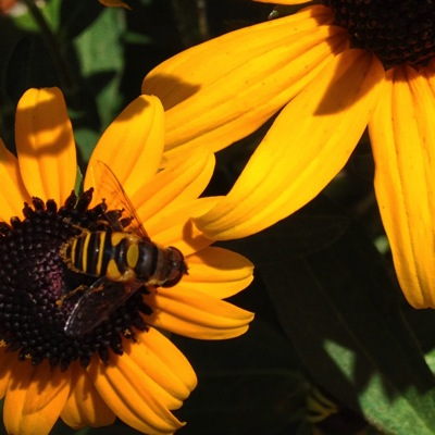 Flower2