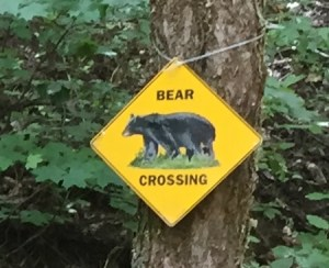 BearCrossing