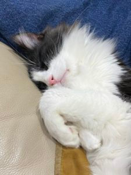Black and white cat sleeping