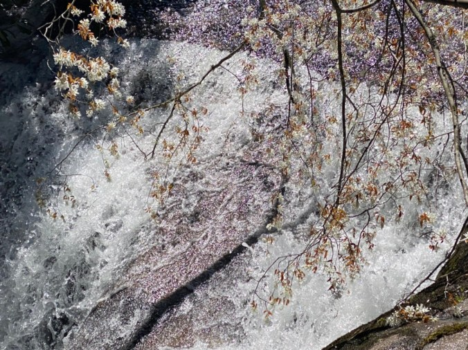 blooming tree over waterfall