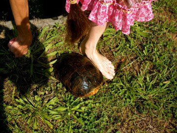 My foot...I wear a size 5 or 5.5 check out the size of the turtle~