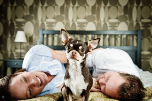 Dogs in Divorce -- Who Keeps the Dog?