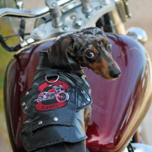 Motorcycle Jackets for Dogs