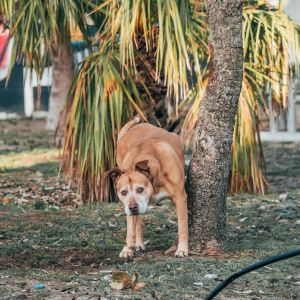 Dog Waste and Clean Up Supplies