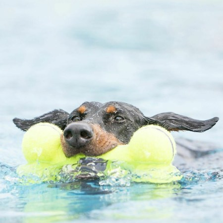 Fetch Toys for Dogs