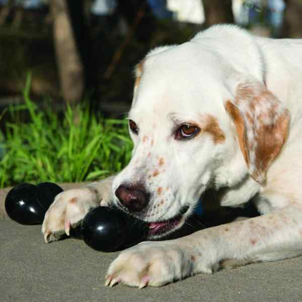 Durable Chew Toys for Dogs