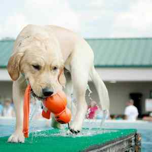 Water Toys for Dogs