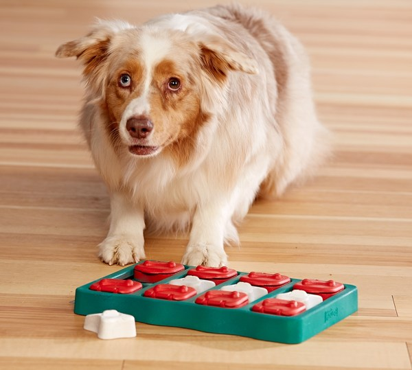 Puzzle Games for Dogs
