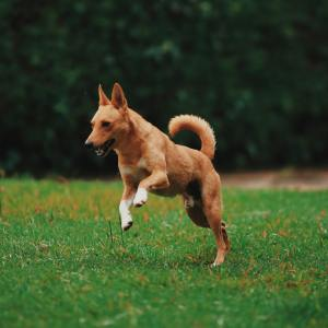 Vitamins and Supplements for Dogs