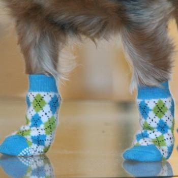 Shoes and Socks for Dogs