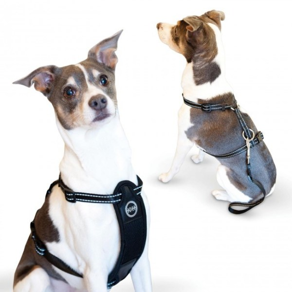 Car Harnesses for Dogs