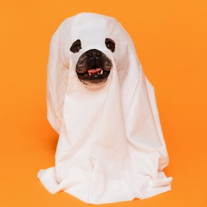 Halloween for Dogs