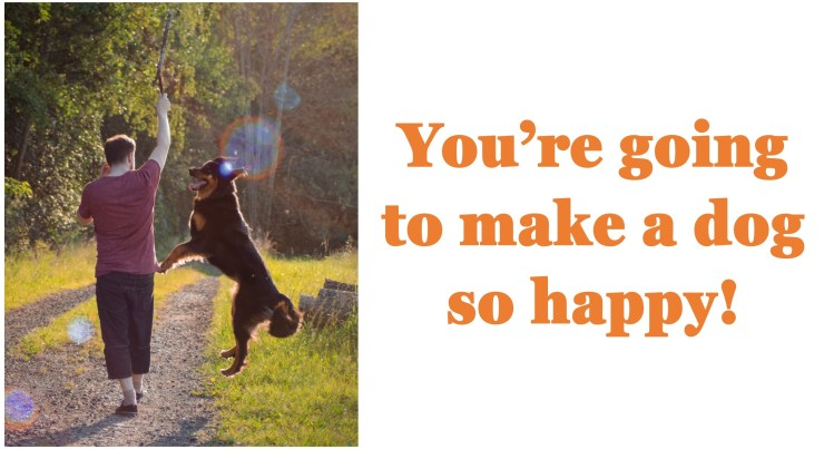 The Bark Academy:  Where dogs are happy!