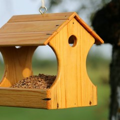Top 10 Bird Feeder Plans
