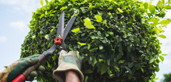 How, What, Why and When to Prune?