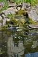 The Bath Priory open garden - 1