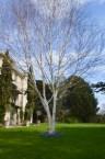 The Bath Priory open garden - 7
