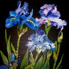 Blue Irises Card