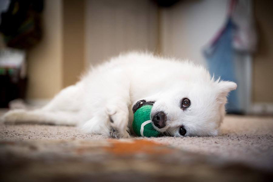 Rambo playing with his ball