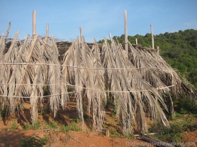 Une plantation de poivre.