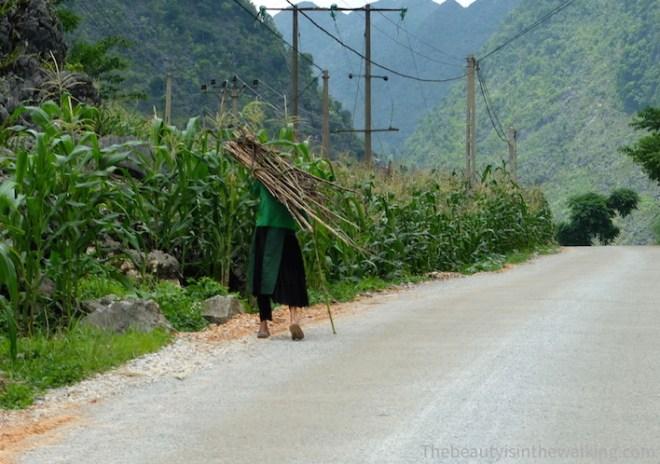 Vieille femme Hmong portant du bois