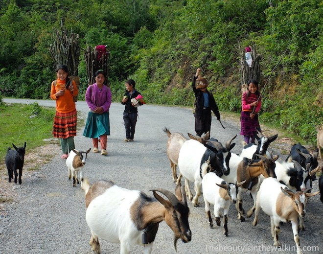 Children and herd of goats