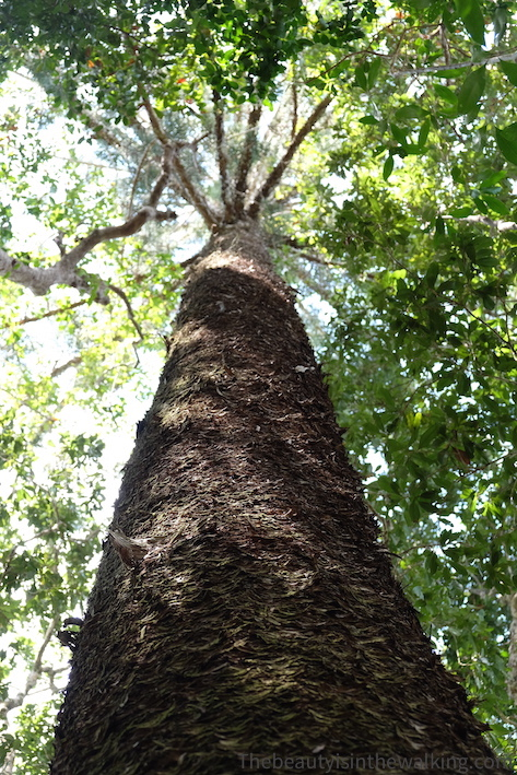 Végétation dans la forêt - Whitsunday Islands