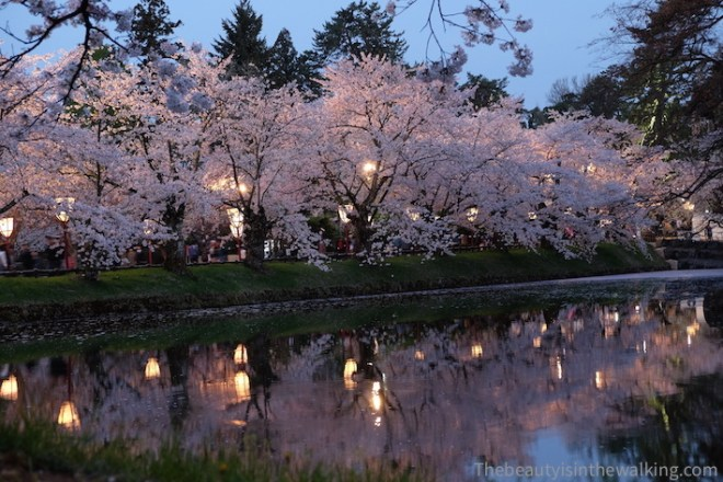 Alley of cherry blossom, Hirosaki Castle
