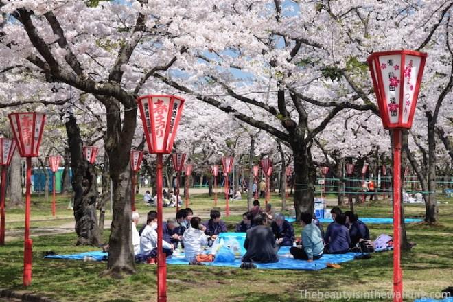 Hanami at Gappo park, Aomori