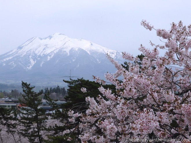 Mount Iwaki and cherry blossom