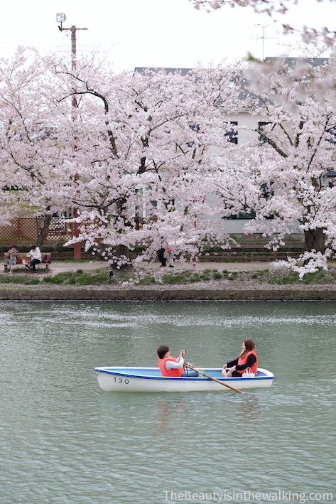 Paddling on the river to enjoy the cherry blossoms