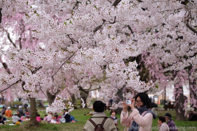 Photo under the cherry blossoms