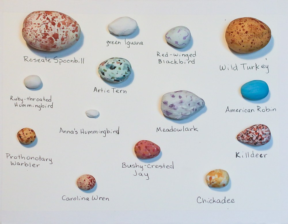 replicate bird eggs for nature study in our animal block
