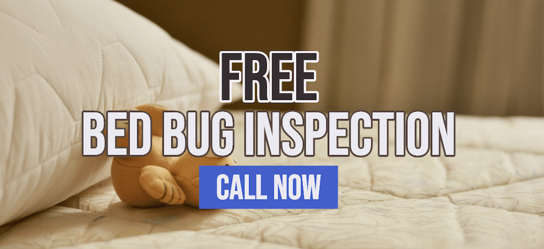 free-inspection-picture