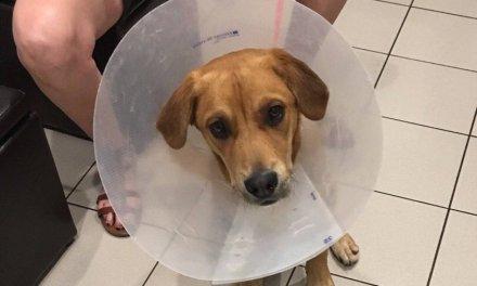 Local Pet Organization Seeking Donations